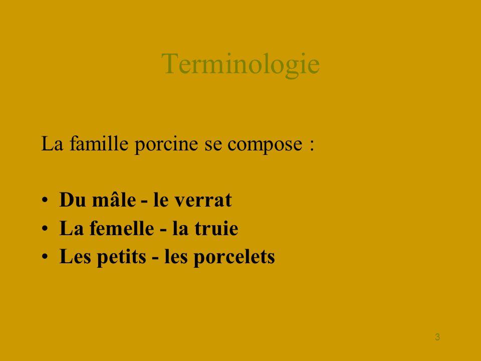 Terminologie La famille porcine se compose : Du mâle - le verrat
