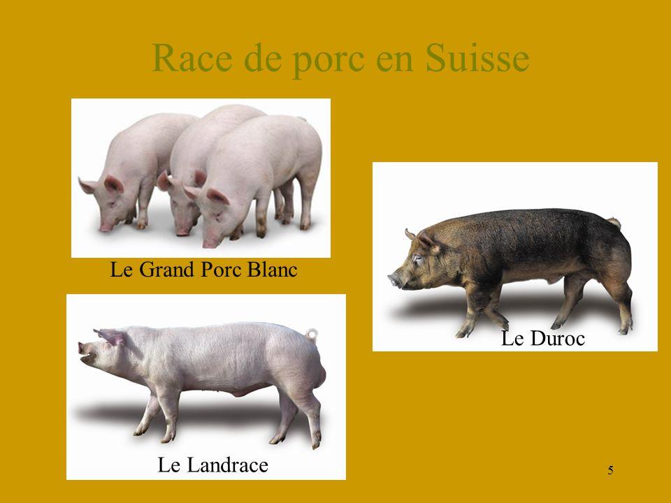 Race de porc en Suisse Le Grand Porc Blanc Le Duroc Le Landrace