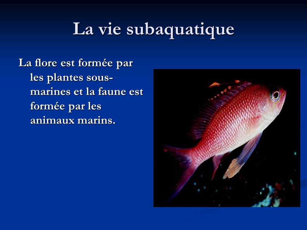La vie subaquatique La flore est formée par les plantes sous-marines et la faune est formée par les animaux marins.
