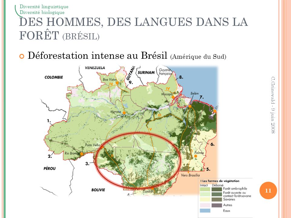 DES HOMMES, DES LANGUES DANS LA FORÊT (BRÉSIL)
