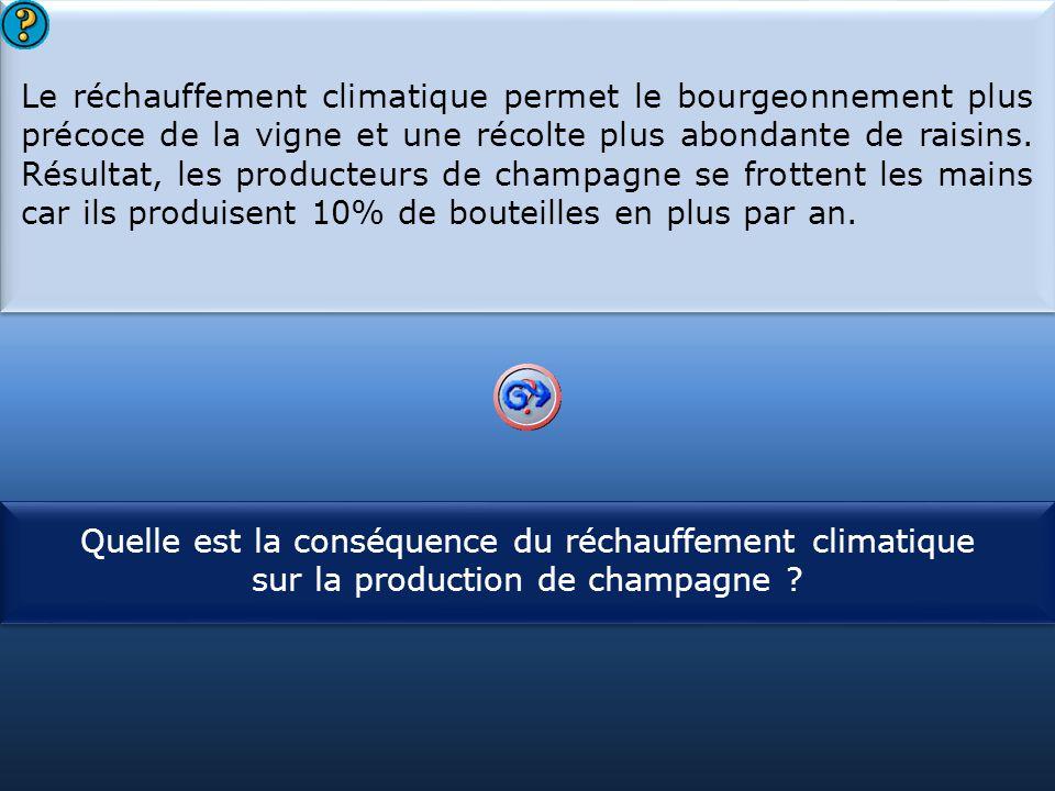 Le réchauffement climatique permet le bourgeonnement plus précoce de la vigne et une récolte plus abondante de raisins. Résultat, les producteurs de champagne se frottent les mains car ils produisent 10% de bouteilles en plus par an.