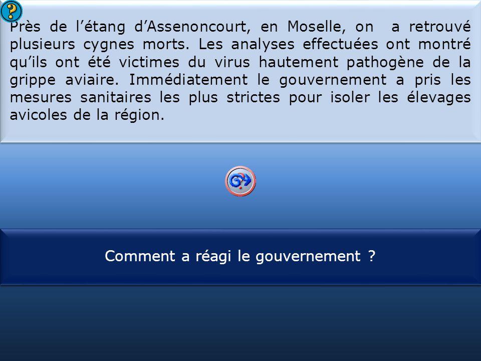 Près de l'étang d'Assenoncourt, en Moselle, on a retrouvé plusieurs cygnes morts. Les analyses effectuées ont montré qu'ils ont été victimes du virus hautement pathogène de la grippe aviaire. Immédiatement le gouvernement a pris les mesures sanitaires les plus strictes pour isoler les élevages avicoles de la région.