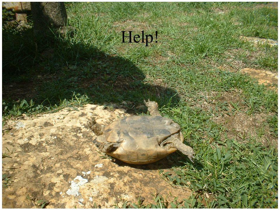 Help! AU SECOURS