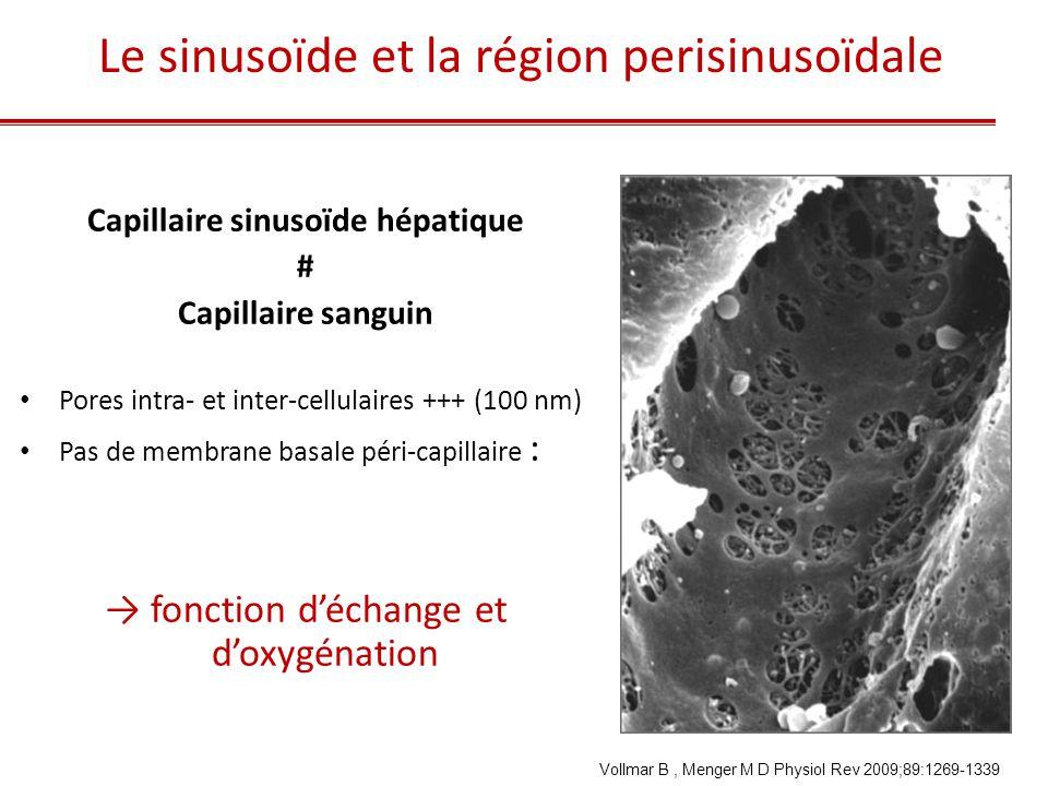 Capillaire sinusoïde hépatique