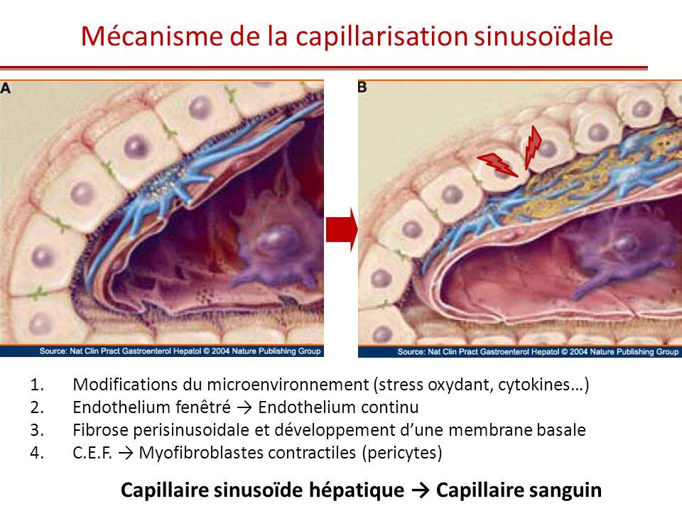 Mécanisme de la capillarisation sinusoïdale