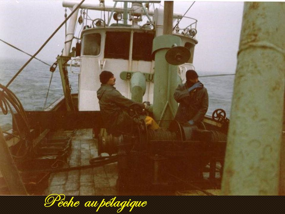 Pêche au pélagique