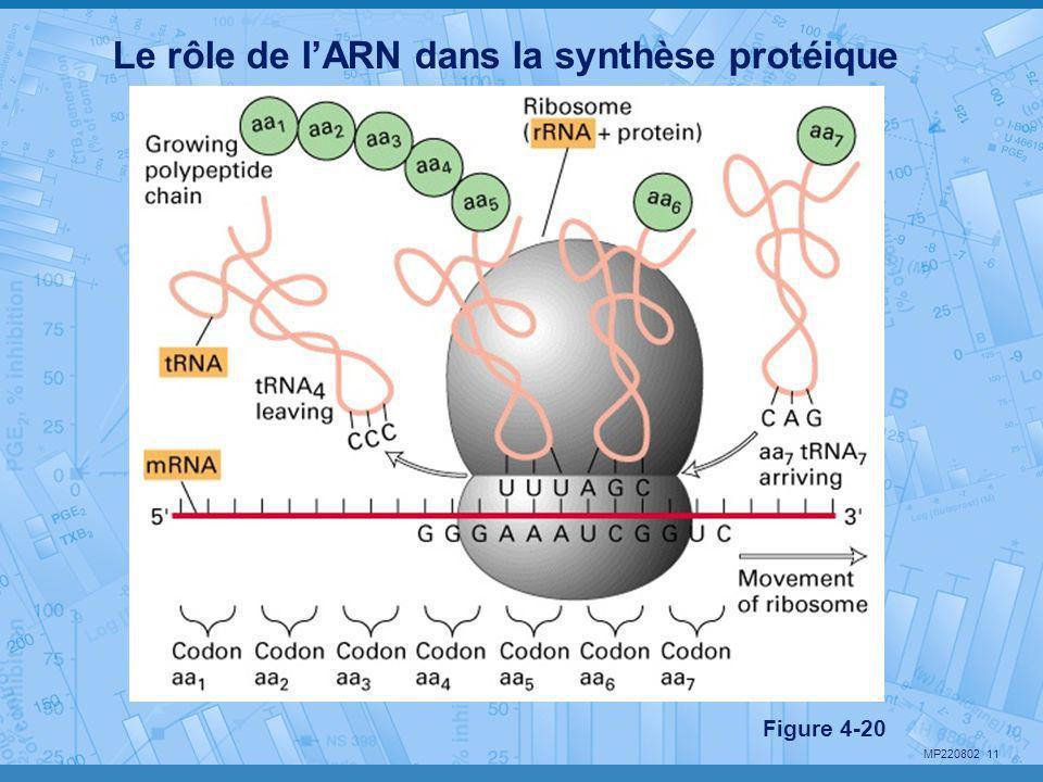Le rôle de l'ARN dans la synthèse protéique