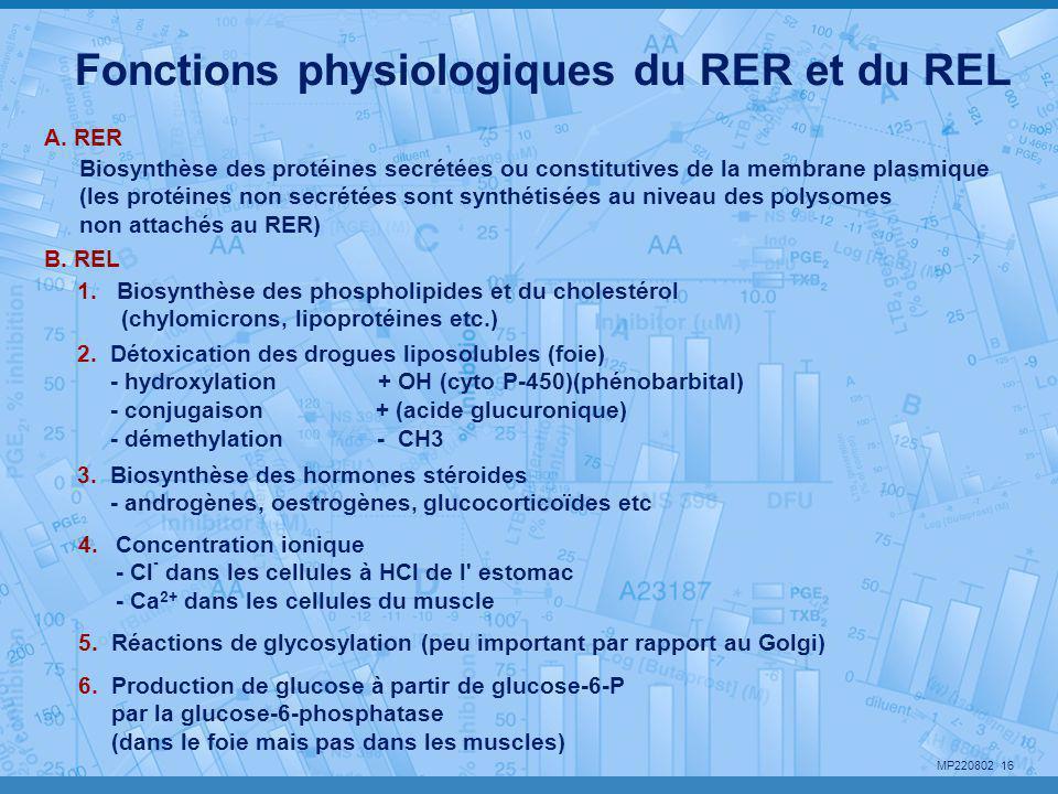 Fonctions physiologiques du RER et du REL