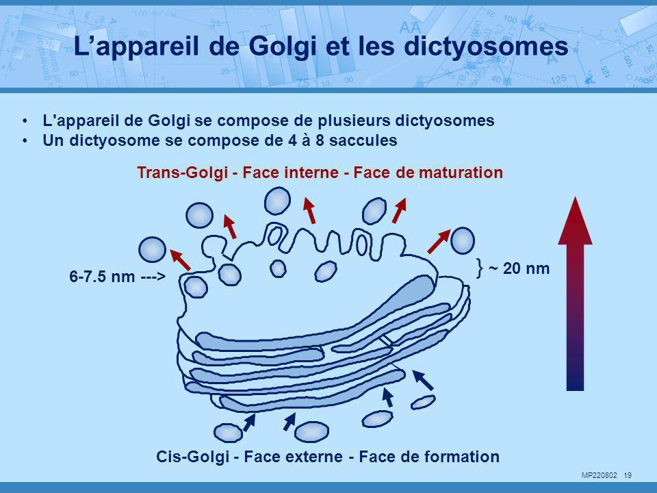 L'appareil de Golgi et les dictyosomes