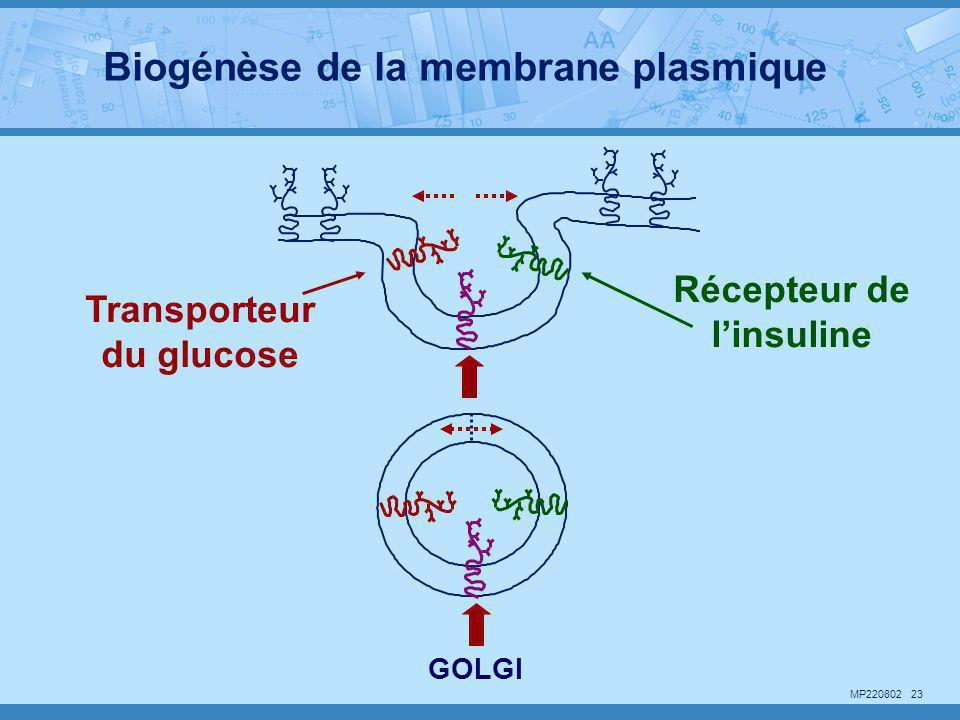 Récepteur de l'insuline Transporteur du glucose