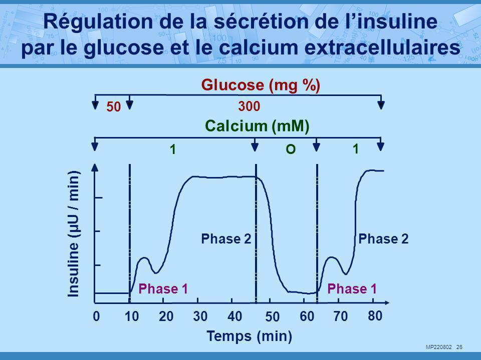 Régulation de la sécrétion de l'insuline par le glucose et le calcium extracellulaires