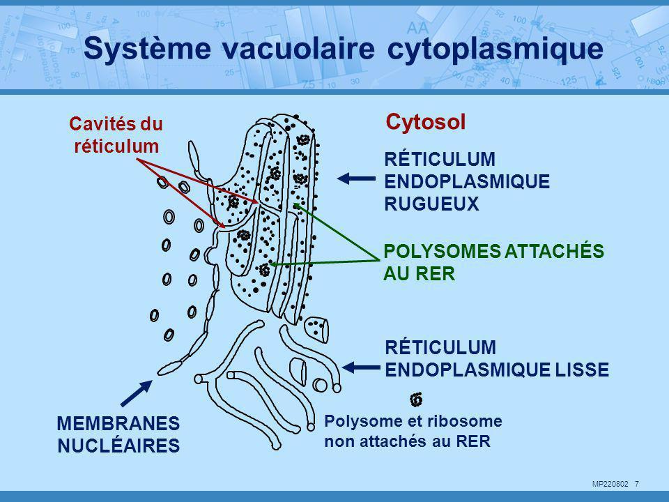 Système vacuolaire cytoplasmique