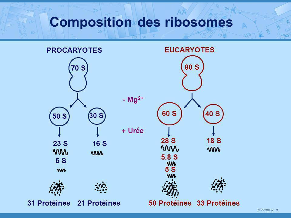Composition des ribosomes