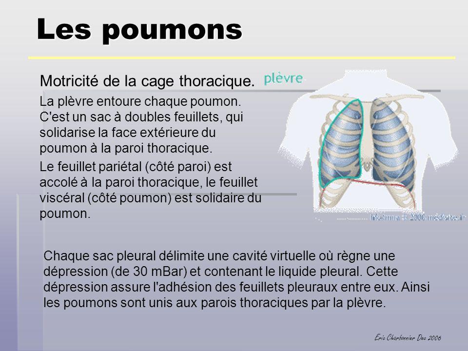 Les poumons Motricité de la cage thoracique.