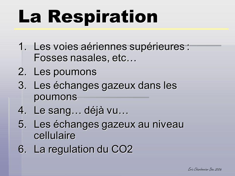 La Respiration Les voies aériennes supérieures : Fosses nasales, etc…