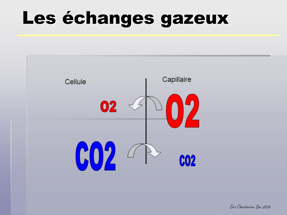 Les échanges gazeux Capillaire Cellule O2 O2 CO2 CO2