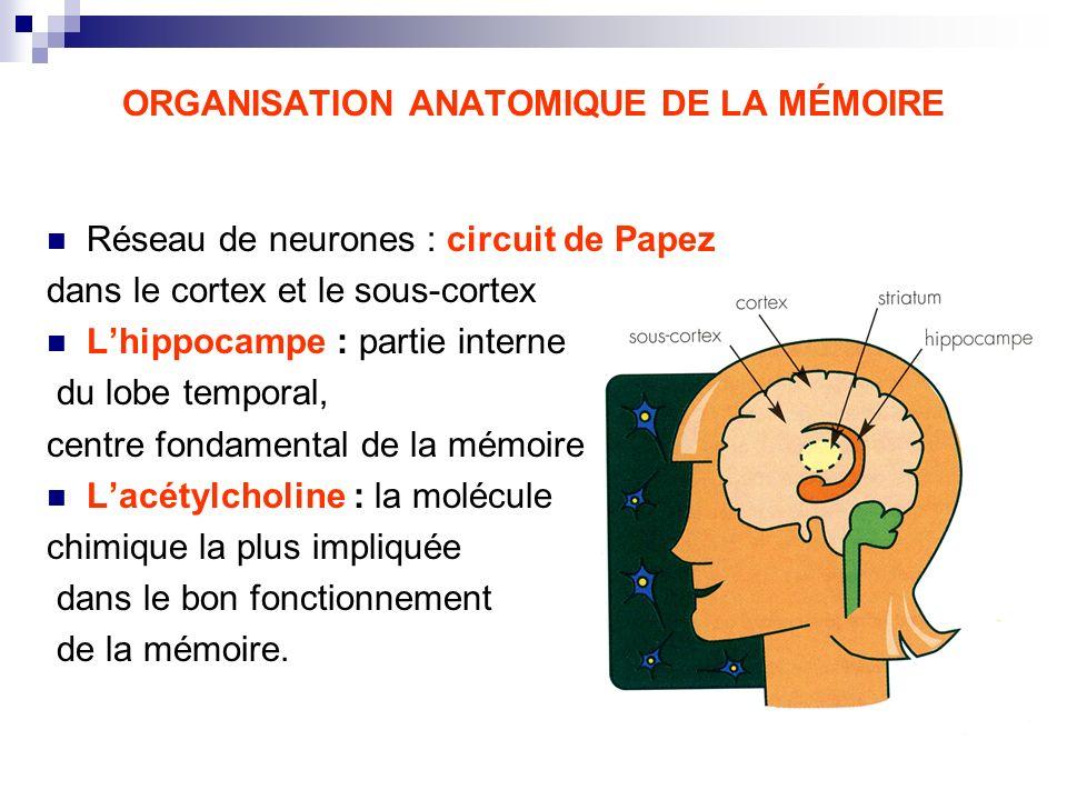 ORGANISATION ANATOMIQUE DE LA MÉMOIRE