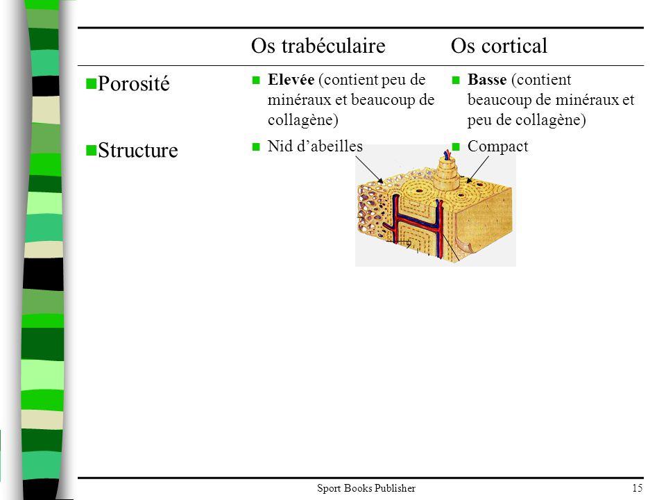 Os trabéculaire Os cortical Porosité Structure