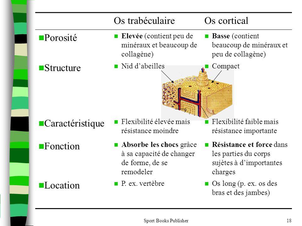 Os trabéculaire Os cortical Porosité Structure Caractéristique