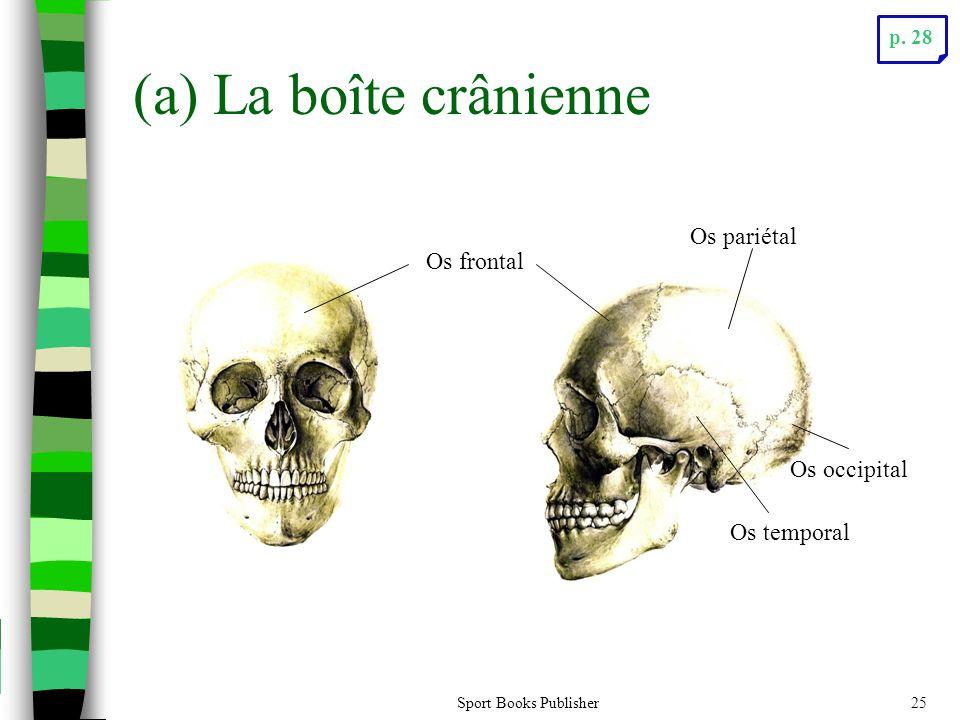 (a) La boîte crânienne Os pariétal Os frontal Os occipital Os temporal