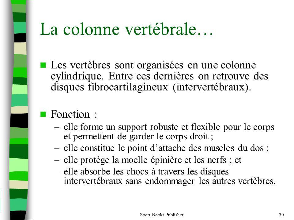 La colonne vertébrale…
