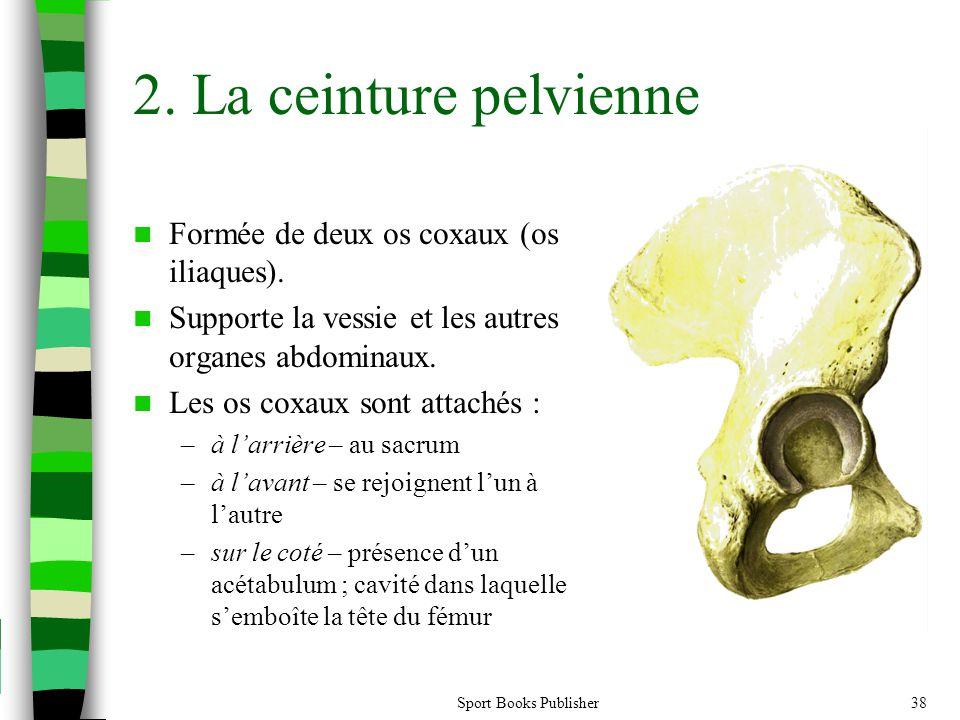 2. La ceinture pelvienne Formée de deux os coxaux (os iliaques).