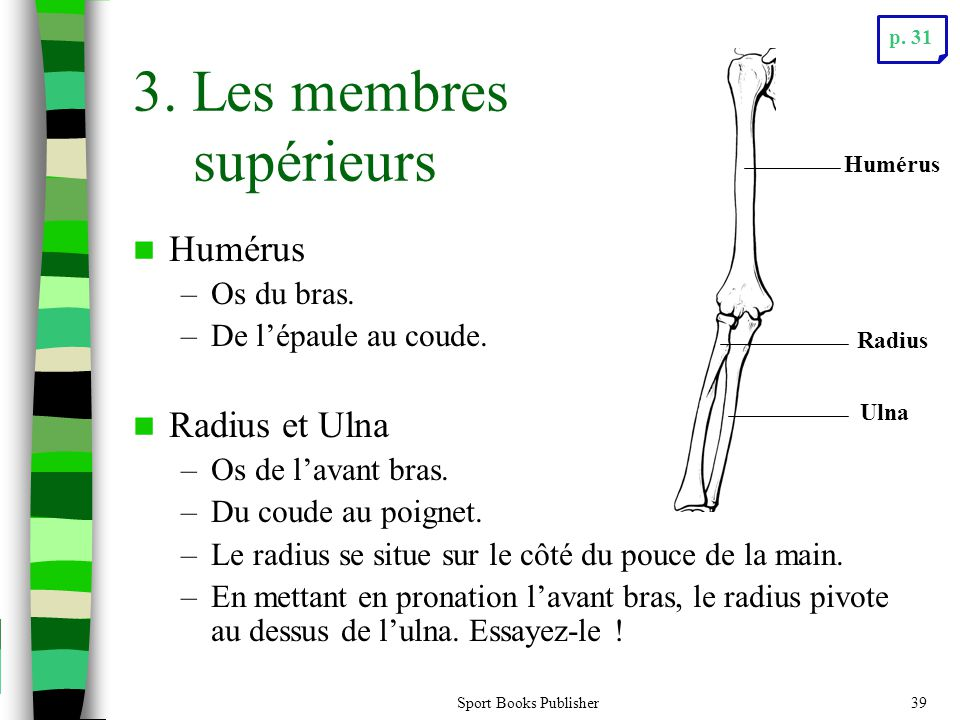 3. Les membres supérieurs