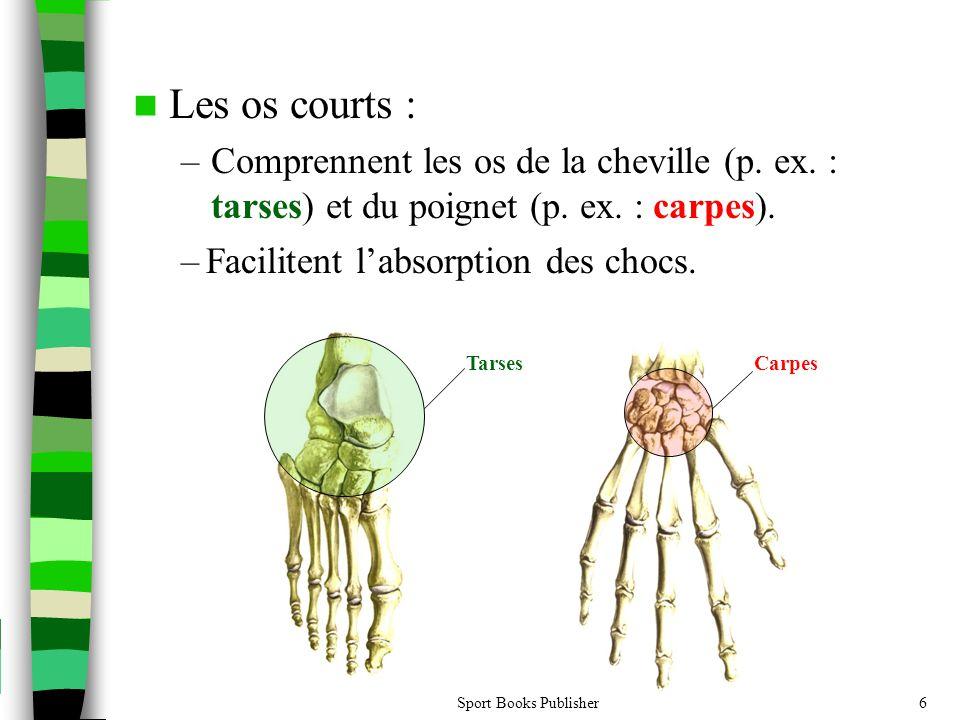 Les os courts : Comprennent les os de la cheville (p. ex. : tarses) et du poignet (p. ex. : carpes).