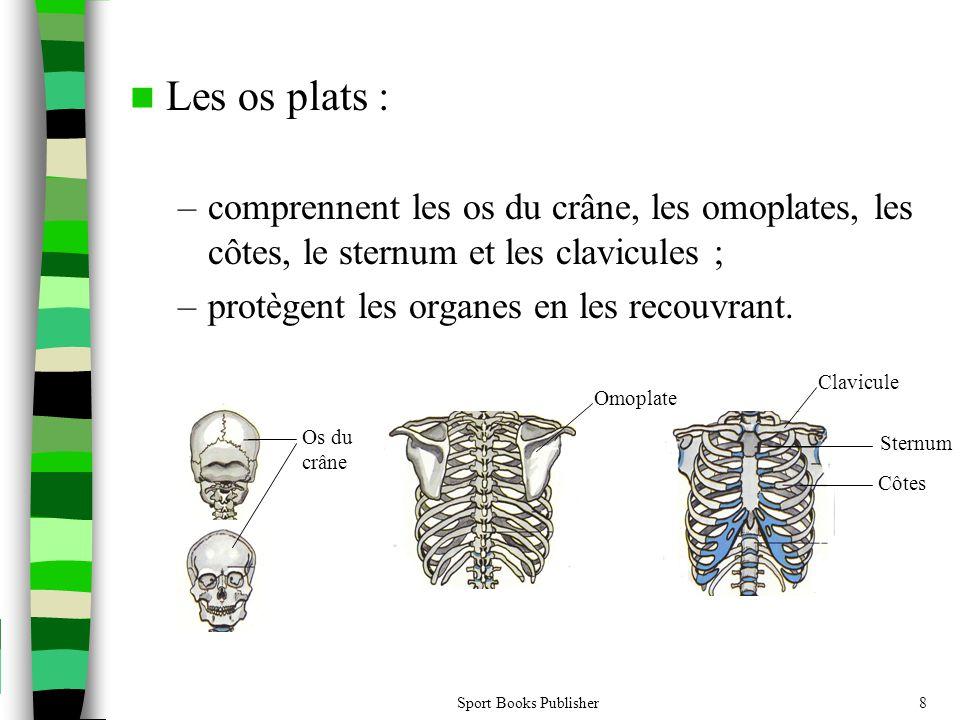 Les os plats : comprennent les os du crâne, les omoplates, les côtes, le sternum et les clavicules ;