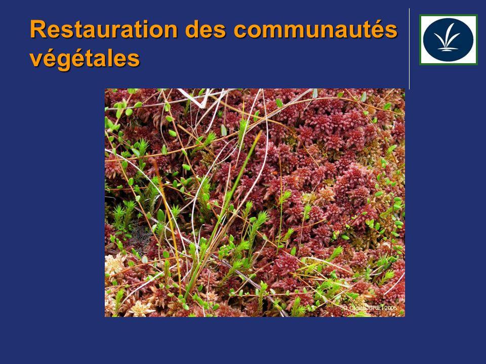 Restauration des communautés végétales