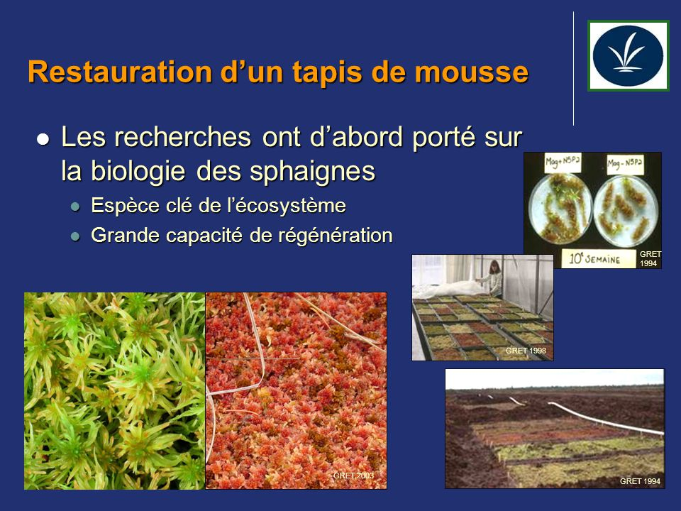 Restauration d'un tapis de mousse