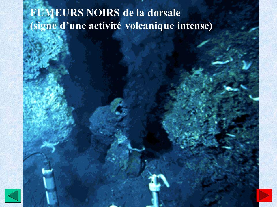FUMEURS NOIRS de la dorsale