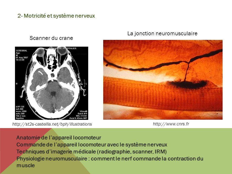 2- Motricité et système nerveux