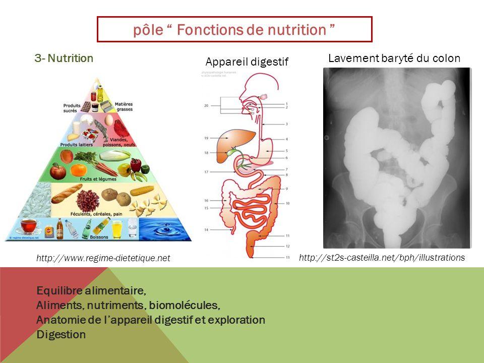 pôle Fonctions de nutrition