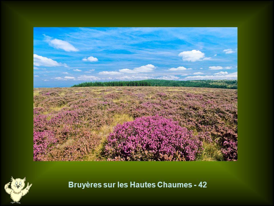 Bruyères sur les Hautes Chaumes - 42