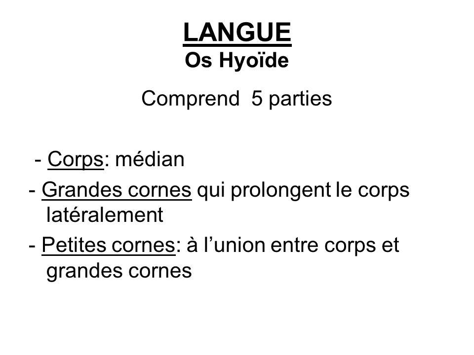 LANGUE Os Hyoïde Comprend 5 parties - Corps: médian