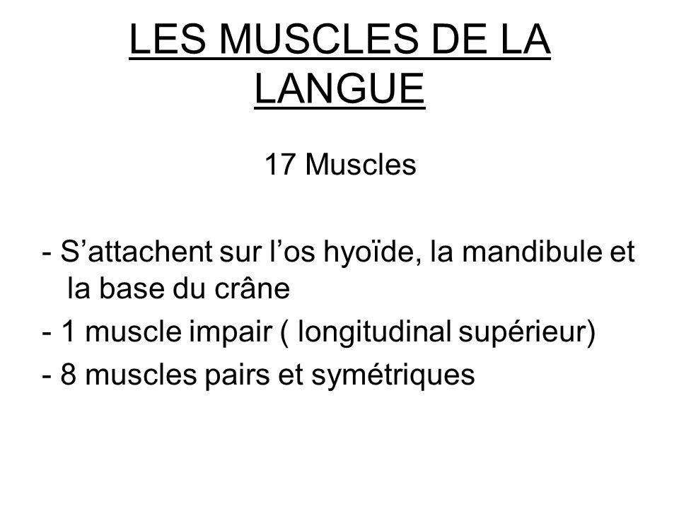 LES MUSCLES DE LA LANGUE