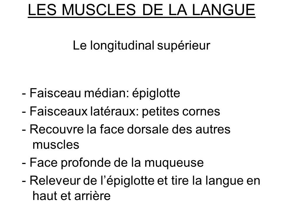 LES MUSCLES DE LA LANGUE Le longitudinal supérieur