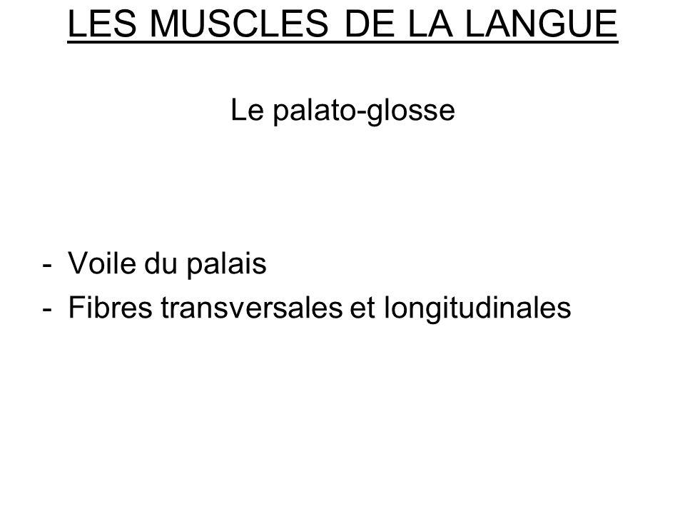 LES MUSCLES DE LA LANGUE Le palato-glosse