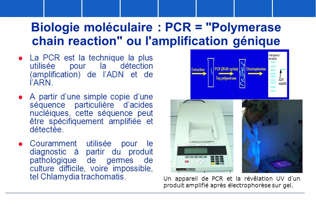 Biologie moléculaire : PCR = Polymerase chain reaction ou l amplification génique