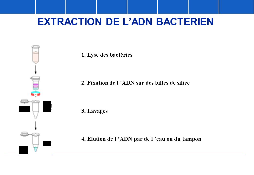 EXTRACTION DE L'ADN BACTERIEN
