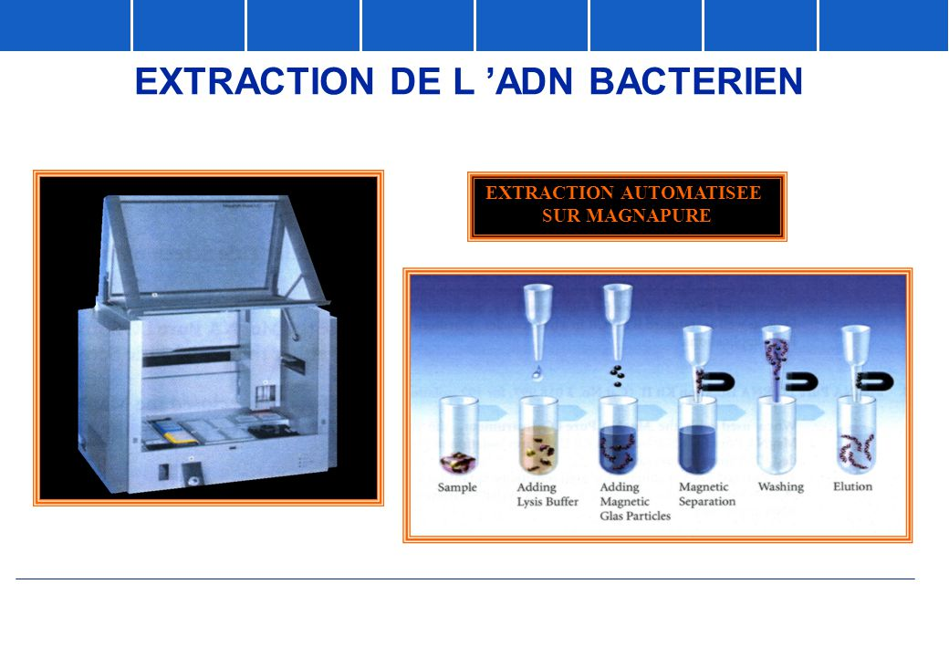 EXTRACTION DE L 'ADN BACTERIEN