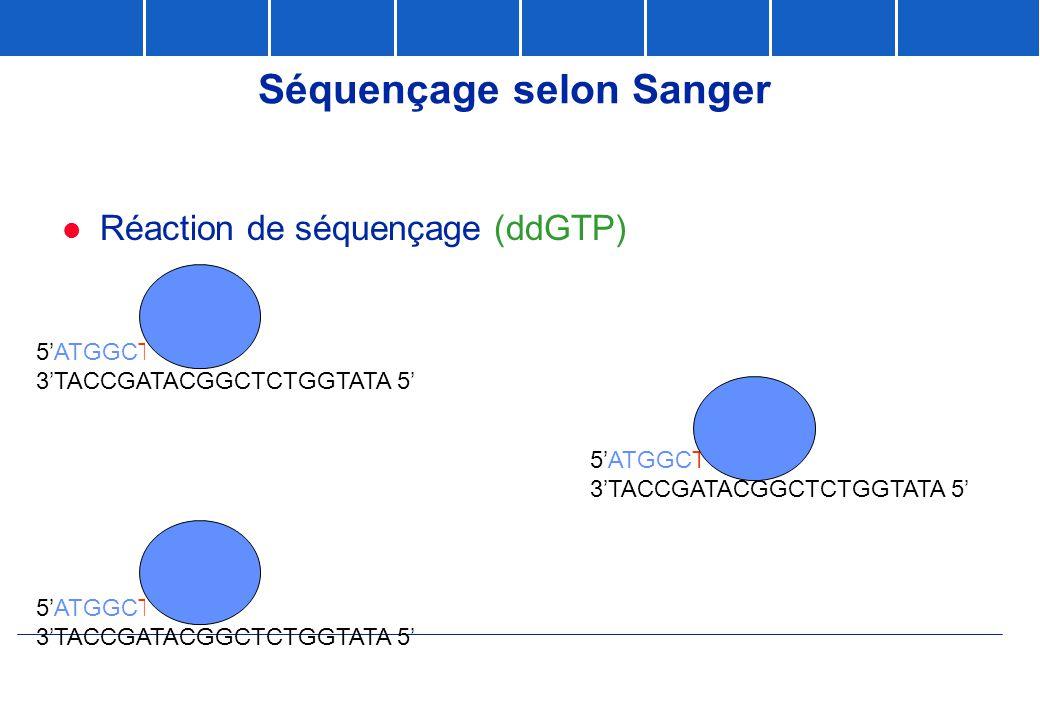 Séquençage selon Sanger