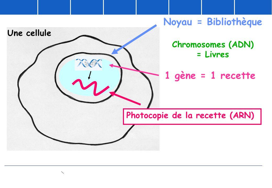 Photocopie de la recette (ARN)