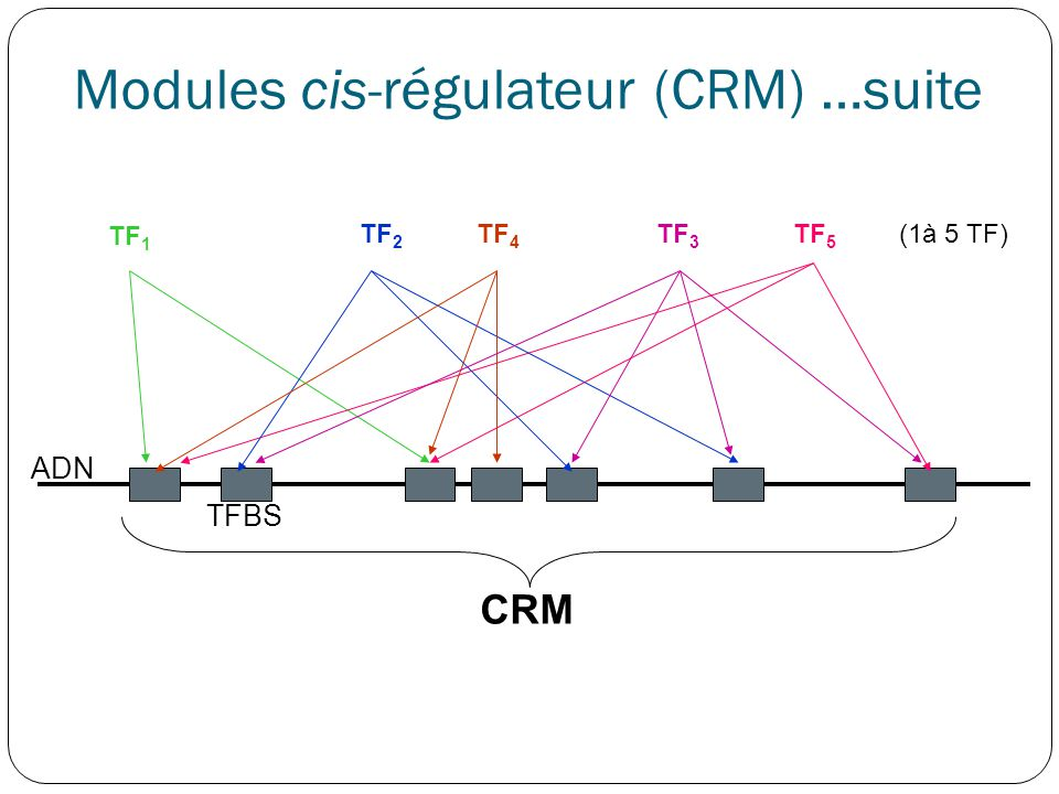 Modules cis-régulateur (CRM) …suite