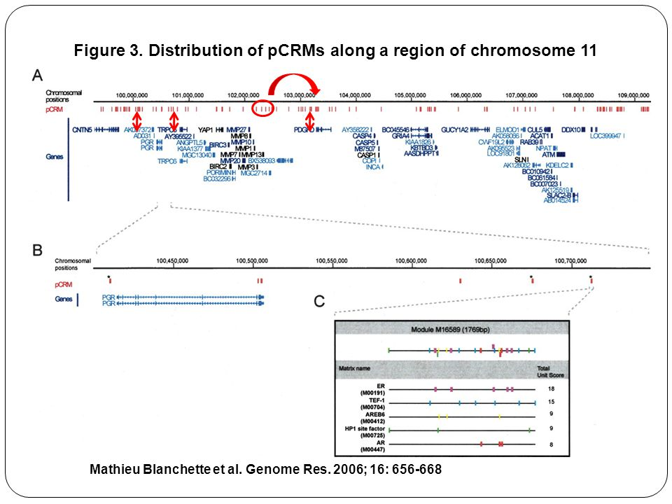 Figure 3. Distribution of pCRMs along a region of chromosome 11