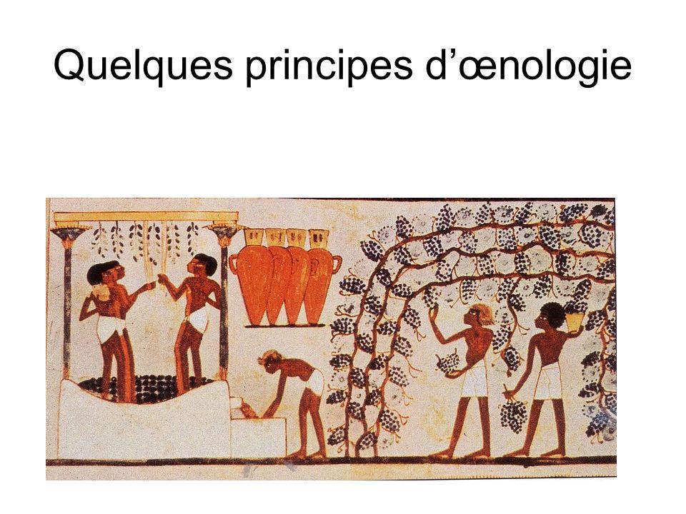 Quelques principes d'œnologie