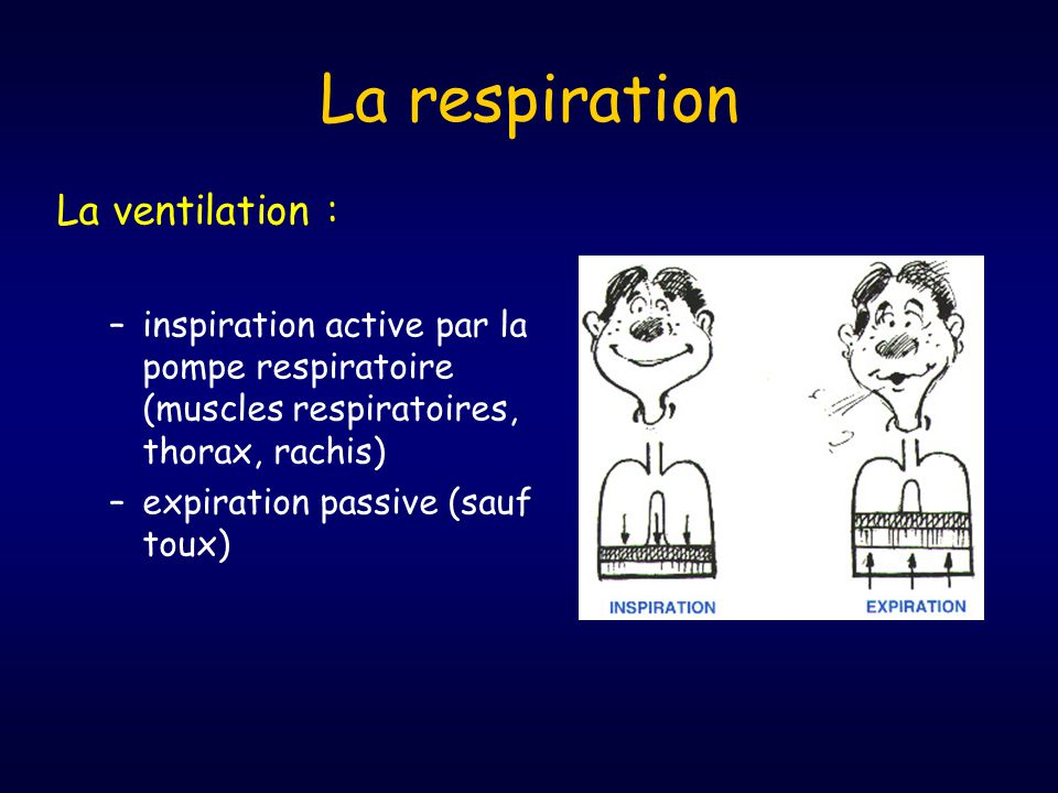 La respiration La ventilation :