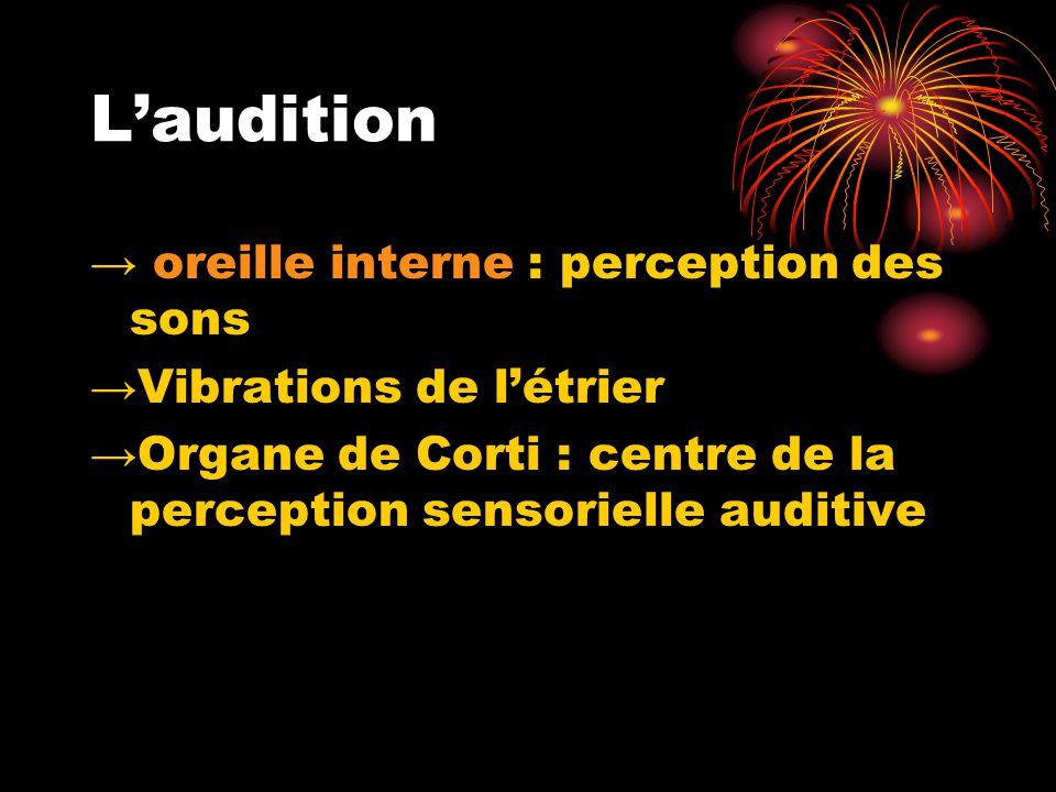 L'audition → oreille interne : perception des sons