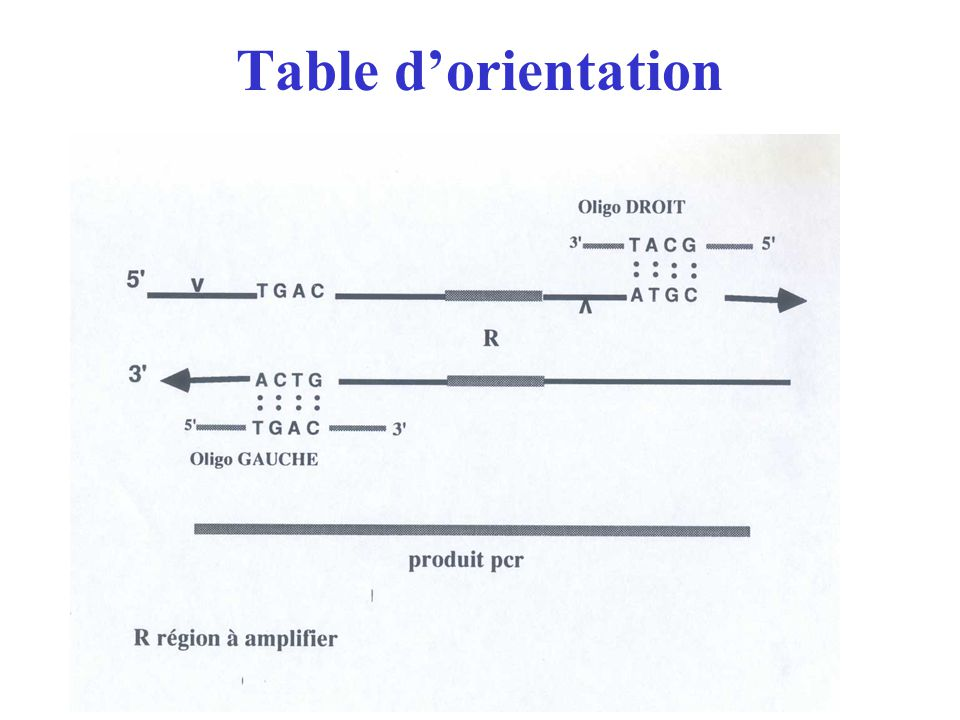 Table d'orientation